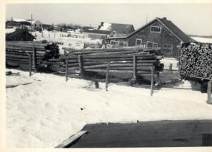 Historical photo of a logging operation in Middlebro Manitoba